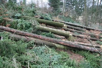 Wald mit Stämmen